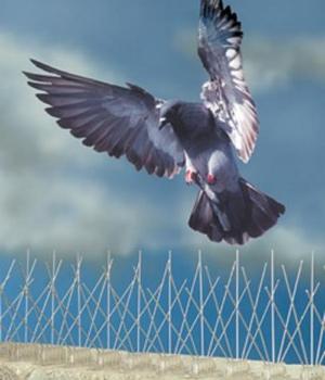 Hroty proti ptactvu