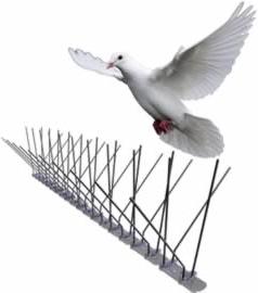 Ochrana proti ptákům