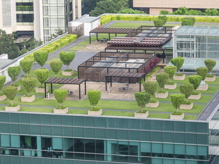 Guttabeta T20 garden