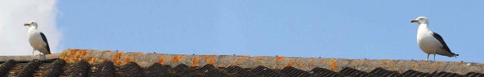Ochrana proti ptákům H 133 - hrotový systém - racek